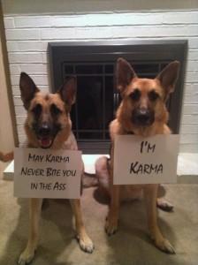 karma dogs
